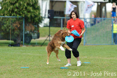 Frisbee Dog Show