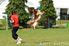 EUC2011, Maribor Slovenia.<br /> Frisbee Dog.<br /> PhotoID : 2011-08-06-0111