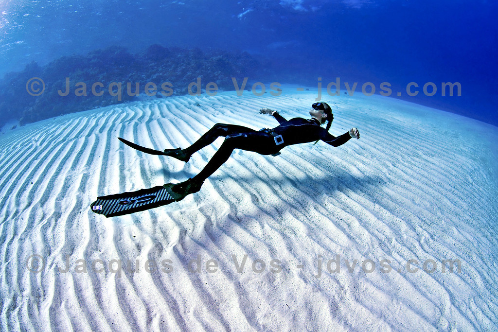 Hover...<br /> <br /> Linda Paganelli over Eel Garden in Egypt<br /> <br /> Ikelite 50D Housing (8'' Dome Port)<br /> Ikelite DS-160 Strobes