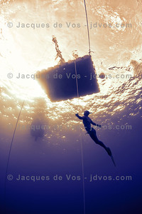 Last Light...  Swedish world record Freediver, Annelie Pompe ascending from a dive during training in Sharm El Shiekh.  Ikelite 7D Housing  Shot taken while Freediving (on a single breath)