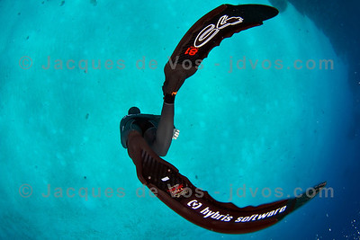 Shot taken while Freediving (on a single breath)  Jeremy Meyer diving to the bottom of Eel Garden in Dahab, Egypt. In the original the ribbon-y Garden Eels are clearly visible coming out of the sandy bottom.  Ikelite 7D Housing (8'' Dome Port) Ikelite DS-161 Strobes