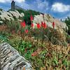A clifftop garden in Portwrinkle, Cornwall, England