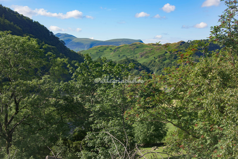View through Rowan Trees, from above Gill Foot, Thirlmere, Cumbria, England