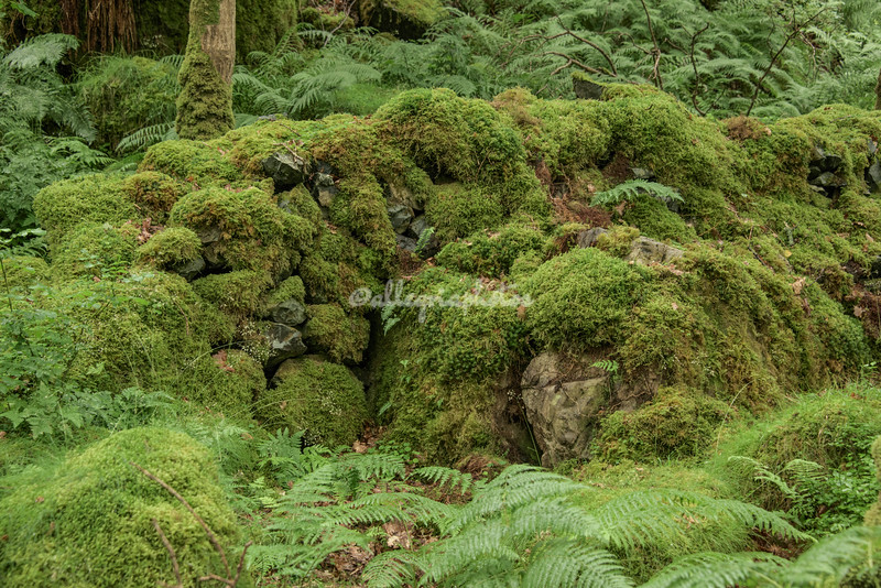 Moss covered wall, High Park Wood, Cumbria, England