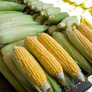 Corn on a cob for sale at green market, Belgrade, Serbia