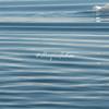 Ripples in the calm sea, Sermilik Fjord