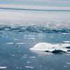 Looking across the ice floes in Sermilik Fjord