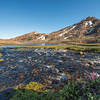 Valley of the Flowers, Tasiilaq