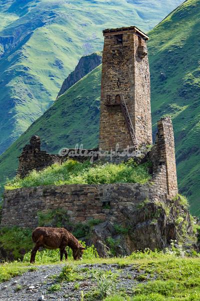 Mule grazing beneath the medieval tower at Sno, Kazbegi