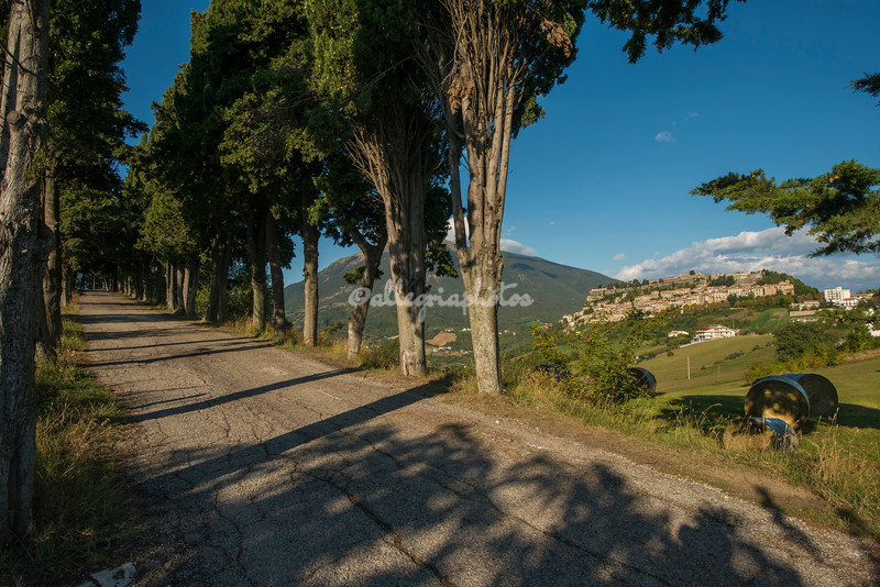 Tree lined road across from Civitella del Tronto, Abruzzo