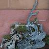 A piece of driftwood, Liguria