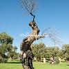 Tolkenesque Olive Tree, Ostuni, Puglia