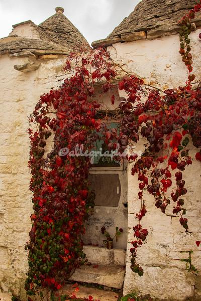 Autumn colors, Alberobello, Puglia