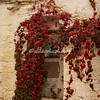 Autumn colors, Alberobello, Puglia