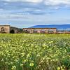 Abandoned Masseria on Gargano Peninsula, Puglia