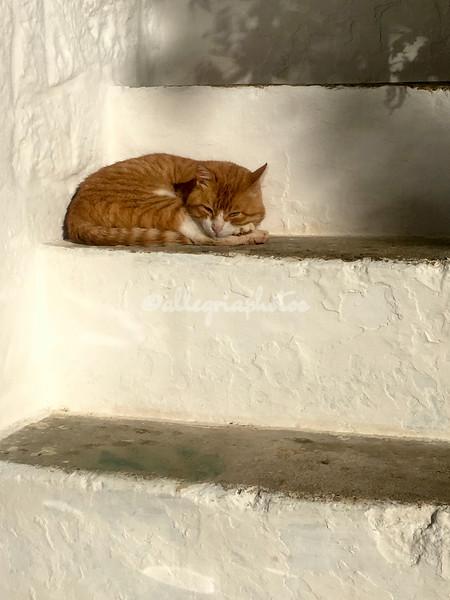 Ginger Cat, Masseria del Frantoio