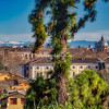 Looking over the Roman skyline from the Orto Botanico