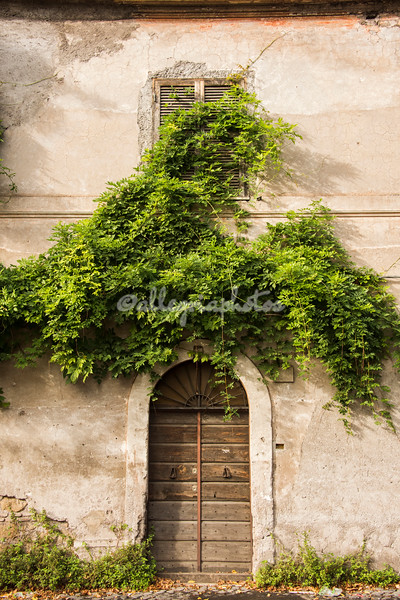 Vine covered doorway on the Appia Antica