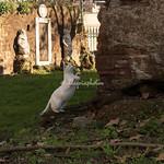 A Cat near the Alchemists Door, Victor Emmanuel Park