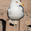 A seagull at Trajan's Market