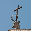Sant'Eustachio Stag's Head