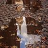 Reflections of Santa Maria della Pace