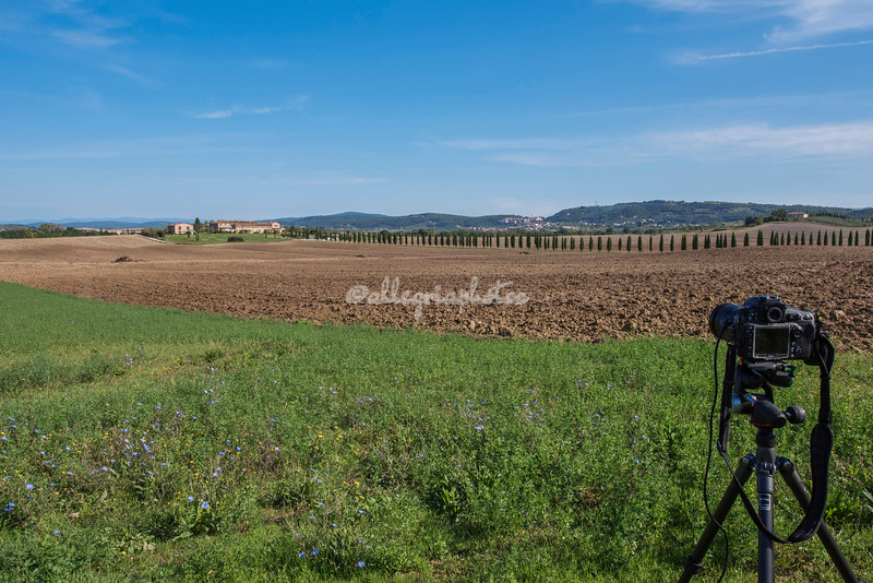 Photographing a row of cypress trees, Tuscany