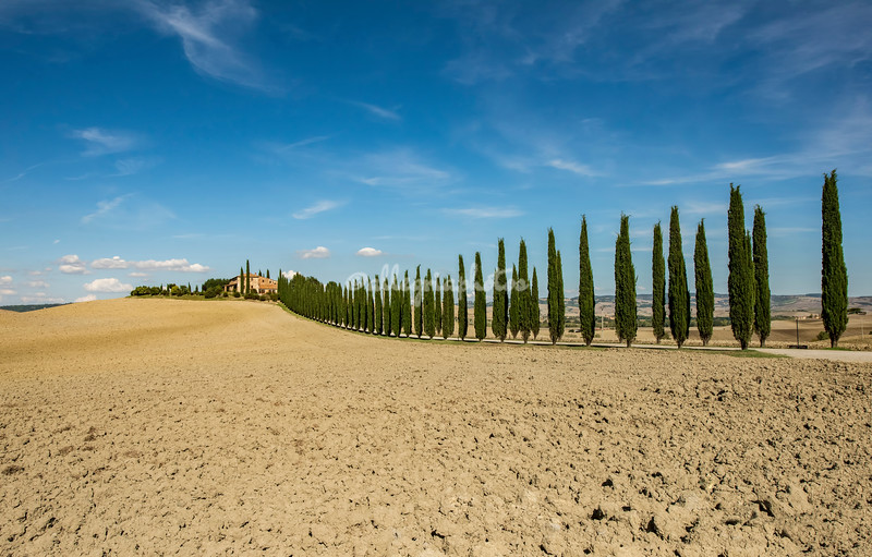 A Tuscan white road lined with cypress trees leading to a farmhouse