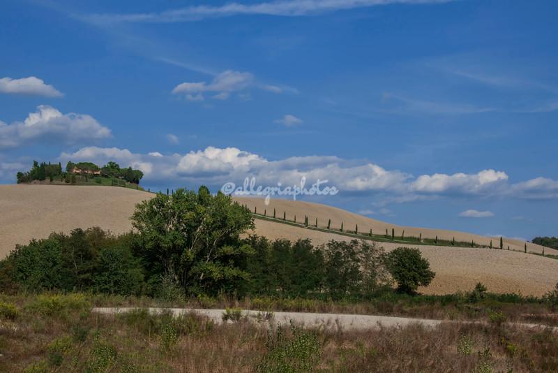 A row of Cypress trees, Tuscany