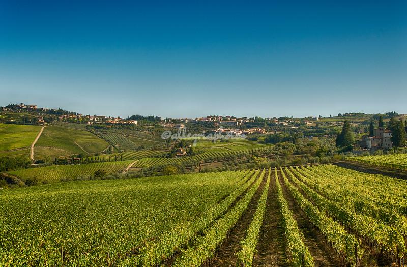 Rows of vines near Greve, Tuscany