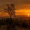 Sunset Chianti