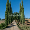 Tuscan White Road and Cypress Trees