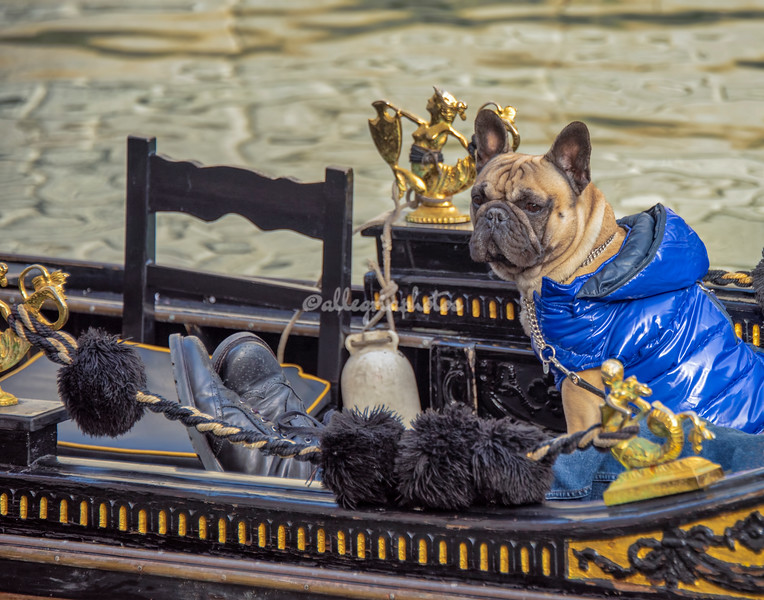 Dogs also like Gondola rides, Venice