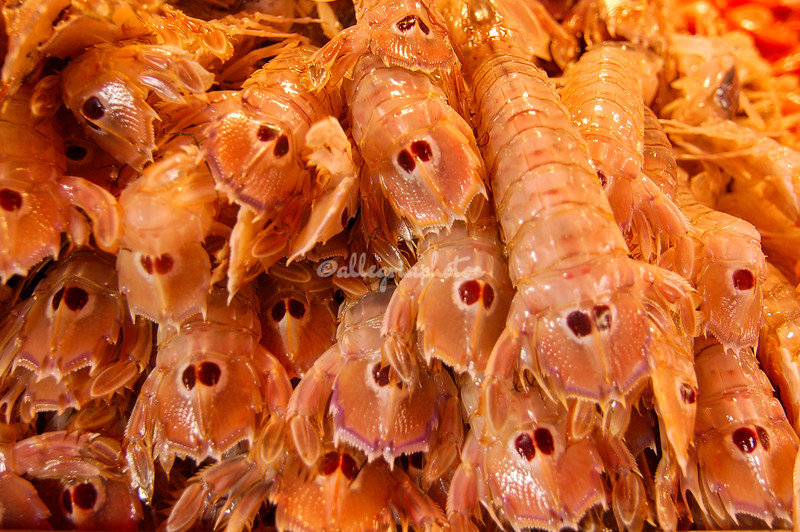 Langoustines, Venice, Rialto food market