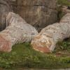 Klip Fish drying covers, Sveggen, Norway