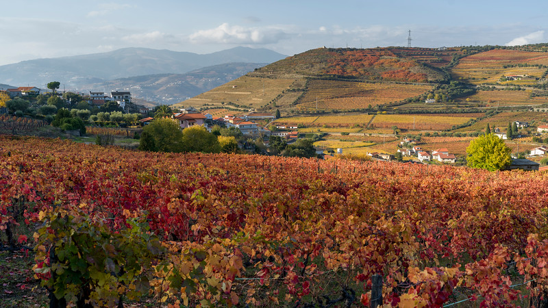Field with mountain range in the background, Douro Valley, Portugal
