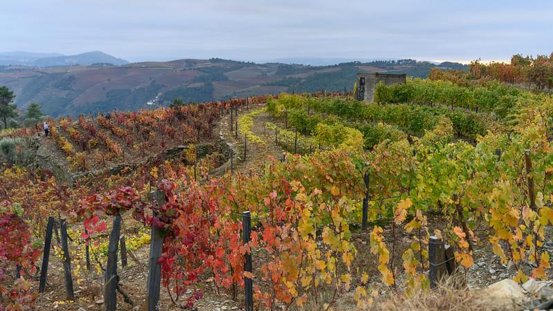 Scenic view of field in autumn, Peso da R�gua, Vila Real, Douro Valley, Portugal