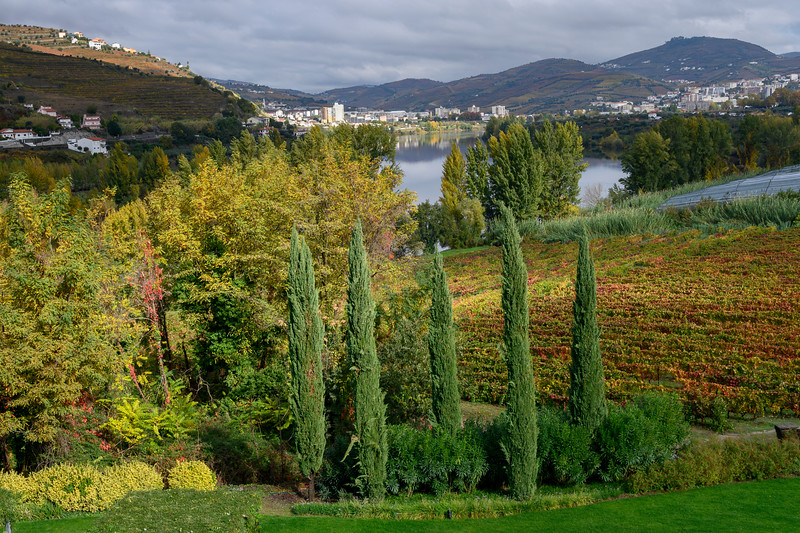 Trees on a hillside, Douro Valley, Portugal