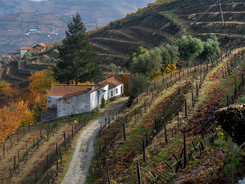 Douro Valley, Viseu District, Northern Portugal, Portugal
