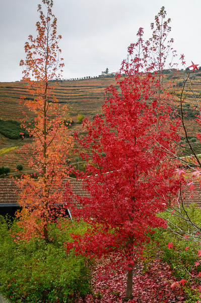 Trees in a valley, Douro Valley, Portugal