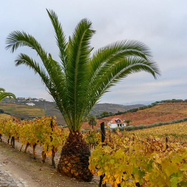 Scenic view of a field, Peso da R�gua, Vila Real, Douro Valley, Portugal