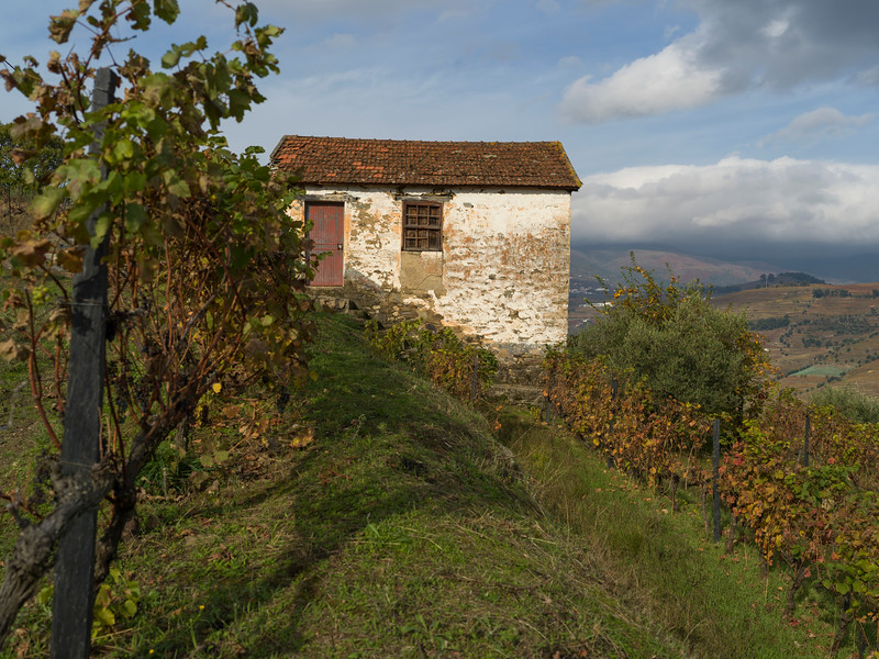 Weathered building and vineyard, Viseu District, Douro Valley, Northern Portugal, Portugal