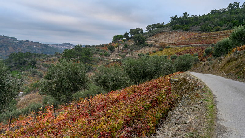 Scenic view of landscape, Peso da R�gua, Vila Real, Douro Valley, Portugal