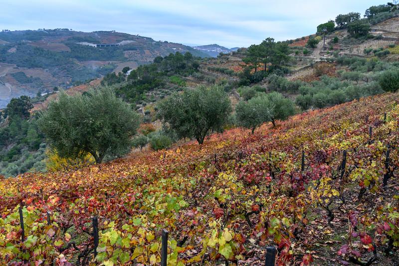 Scenic view of a field in autumn colors, Peso da R�gua, Vila Real, Douro Valley, Portugal