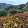 Scenic view of a field in autumn colors, Peso da R�gua, Vila Real, Douro Valley, Portugal
