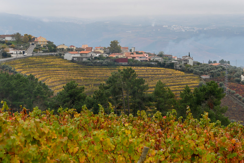 Houses on a hill, Peso da R�gua, Vila Real, Douro Valley, Portugal
