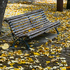 Empty park bench surrounded with fallen leaves, Viseu District, Northern Portugal, Portugal