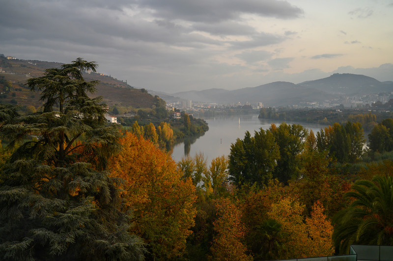 Autumn trees, Douro River, Lamego Municipality, Viseu District, Douro Valley, Northern Portugal, Portugal