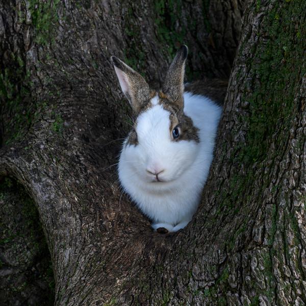 Close-up of rabbit, Santa Maria de Belem, Lisbon, Portugal