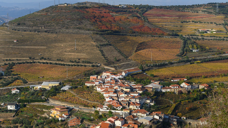 Elevated view of houses in a village, Lamego Municipality, Viseu District, Douro Valley, Portugal